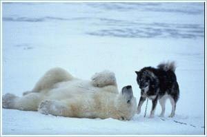 北極圏でおきた奇跡の友情