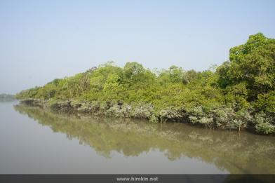 満潮時のマングローブ林